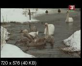 Река жизни (2009) DVB от AND03AND