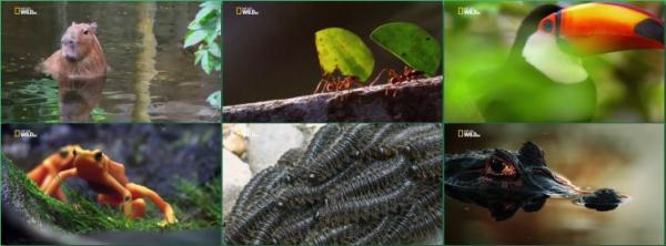 МИР ДИКОЙ ПРИРОДЫ.  Амазонские джунгли / WORLD OF THE WILD. Amazon
