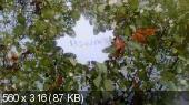 368b9b2f15632d27112b5b32a313af50.jpeg