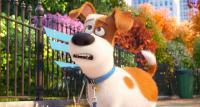 Тайная жизнь домашних животных / The Secret Life of Pets (2016) BDRip 1080p [HEVC]