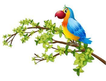 Фотоконкурс Домашние птички. Поздравляем победителей. C839a02ab0e1ae2cfdb5aea356525f2d